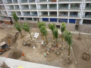 Proyecto 2011- Plantacion de Palmera